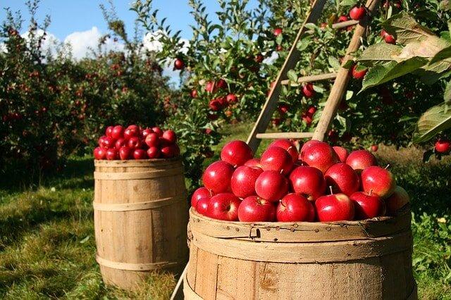 producenci zdrowej żywności